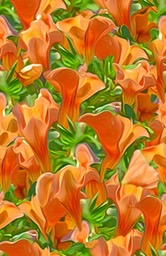 orange-petunia-repeat_med_hr